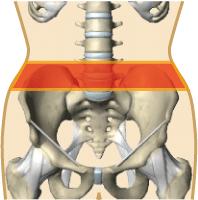 ベルトの腸骨サイズ