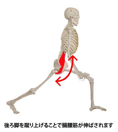 腸腰筋_名古屋_june16