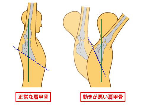肩甲骨の動き