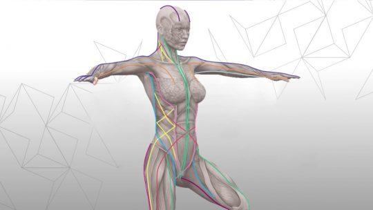 筋膜のつながり