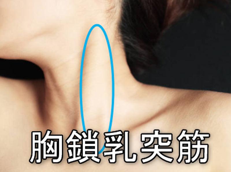 首の筋肉(胸鎖乳突筋)