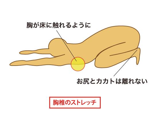 胸椎のストレッチ